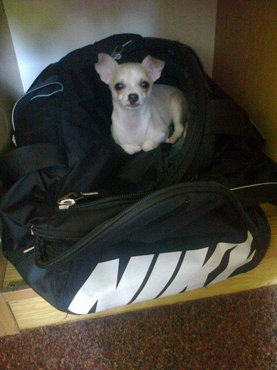 JAMMIEK. Po půlhodinovém hledání objeven v zavřené skříni spící v cestovním batohu.