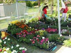 Mezi nejoblíbenější akce Amfiku Bukovina patří květinové dny. V rámci této akce lidé zhlédli tisíce zajímavých květinových vazeb a užili si bohatý doprovodný program.
