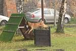 Dvoje zkoušky neboli psí maturitu složilo během čtrnácti dnů na uherskoostrožském cvičišti patnáct majitelů psů.