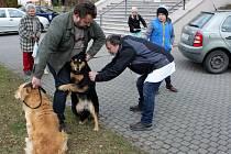 Očkování psů proti vzteklině na Velehradě