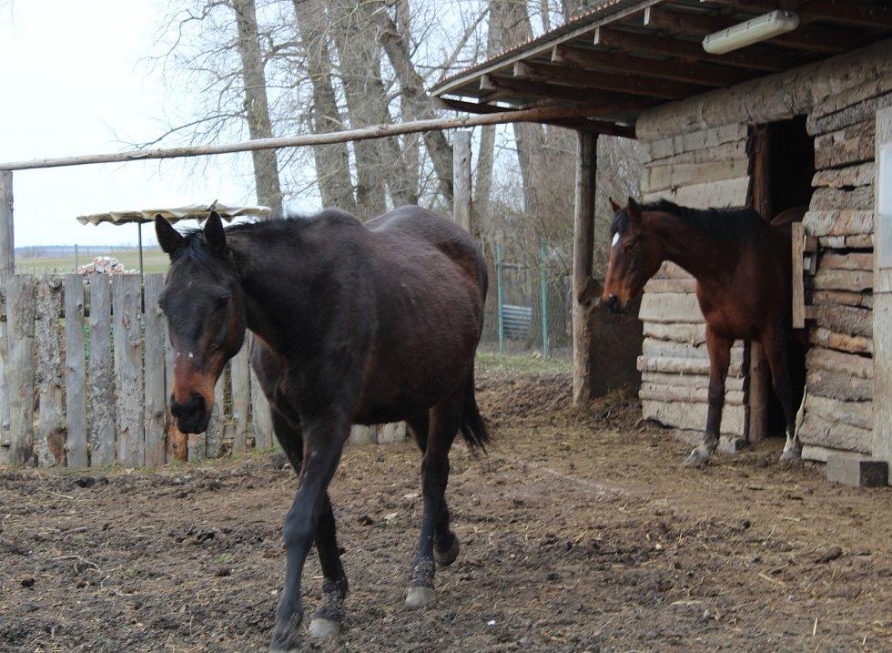 Farma Bobík na Babí hoře.