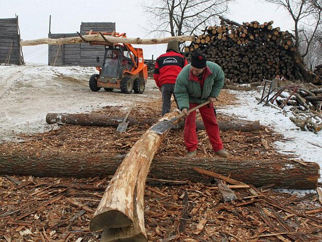 Rýči musejí pracovníci odstranit dubovou kůru z kmenů na výstavbu nových replik ve skanzenu.
