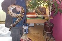 Zhruba dvoumetrový had se ženě zakousl do obličeje v blízkosti oka.