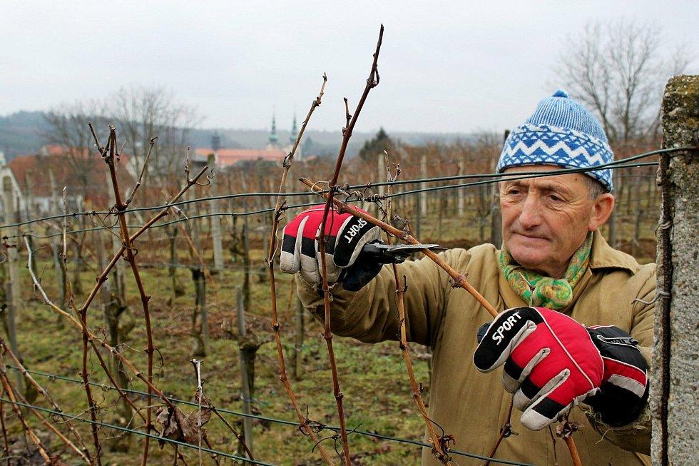 Velehradský vinař Vojtěch Luža při řezu vinné révy.