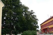 Jasanům před školou v Březolupech prozatím kácení nehrozí. Starosta obce ale netají strach o zdraví školáků i ostatních kolemjdoucích