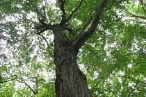 Strom roku habr obecný.