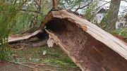 V Nivnici zlomil silný vítr dvaaosmdesát let starou vrbu u místního památníku Komenského.