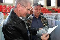 """Na celostátní výstavě poštovních holubů v Hluku bylo k vidění na pět stovek """"dospělých koní vzduchu""""."""