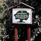 Lípa Neviny II. roste před radnicí městečka Buchlovice.
