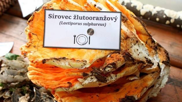 Na výstavě hub v Salaši byly k vidění velmi chutné exempláře, ale i houby, které se dají jíst jen jednou.