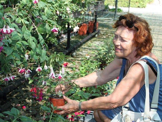 Návštěvníci zámeckého zahradnictví obdivují barevné tvary fuchsiových lampionků.