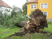 Řádění noční bouřky - lipové stromořadí u řeky Moravy, neděle 13. června 6.00.
