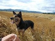 SOFI.  I tráva je větší než já! Vlastně i jazyk!