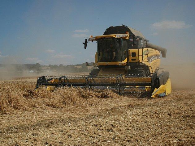 Sklizeň obilí na poli v Kunovicích.