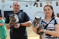 Na 160 soutěžících koček přinesli chovatelé na 17. ročník Mezinárodní výstavy koček do prostor bojkovického Zámku Světlov.