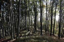 Přírodní rezervace Holý kopec na podzim.