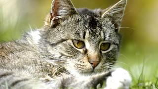 amatérské černé kočička fotky