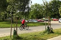 Zavlažovací vaky připevněné na kmeny mladých stromů.
