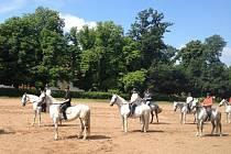Neuskutečněné banderium jezdci nacvičovali v Národním hřebčíně Kladruby nad Vltavou.