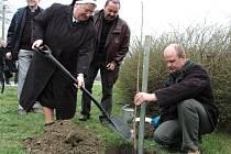 Výsadby oskeruše se zúčastnil také starosta Modré Miroslav Kovářík (vpravo) a starosta Velehradu Stanislav Gregůrek (uprostřed).