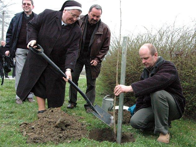 Oskeruše, košt a pěstování