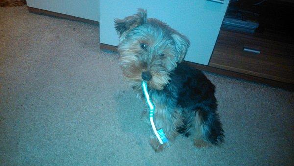 ROCKY. První stomatologický pes!