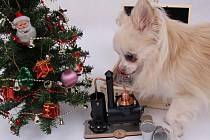 Minipálenice jako vánoční dárek. Ilustrační foto.