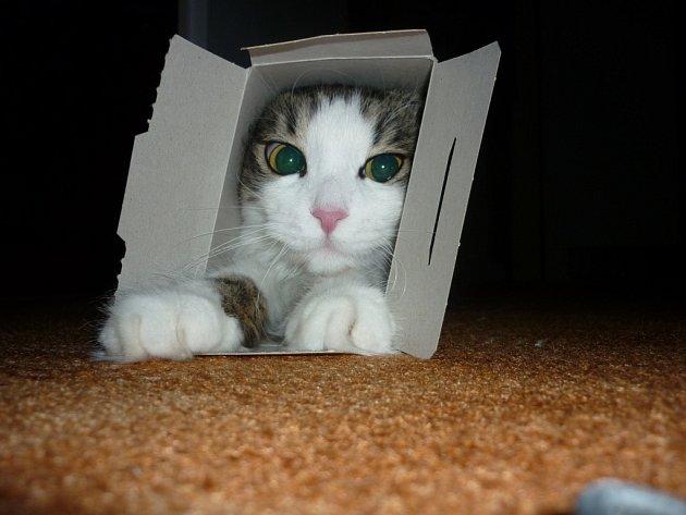 MARFUŠA. Nějaké kupované kočičí pelíšky zůstanou bez povšimnutí a přednost mají krabičky a krabice.