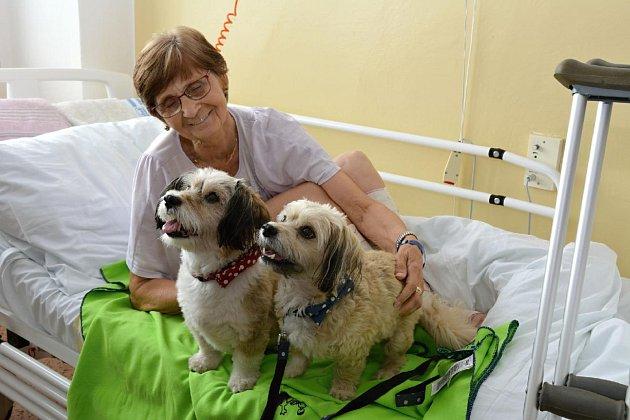 Až dvacet dobrovolných pomocníků dochází do Uherskohradišťské nemocnice za pacienty. Velmi záslužnou pomocí je i Renata Poláková se svým handicapovaným synem Petrem a dvěma psíky z útulku.