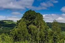 Lípa roste na Vyškovci zhruba 200 let.