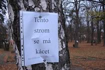 Stromy určené k likvidaci v brodských Tyršových sadech označili organizátoři petice textem.