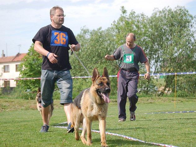 Účastníci se se svými psy před rozhodčími předvedli ve vymezeném kruhu.