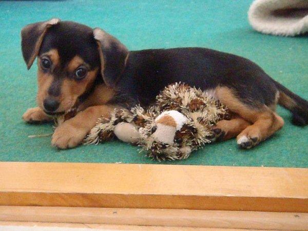 ELIŠKA. Její život sice nezačal ideálně, byla nalezená jako štěně usilnice, ale po krátkém pobytu vútulku přece jenom našla krásný domov vrodině Krčových.