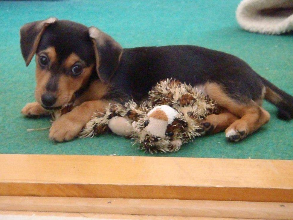 ELIŠKA. Její život sice nezačal ideálně, byla nalezená jako štěně u silnice, ale po krátkém pobytu v útulku přece jenom našla krásný domov v rodině Krčových.