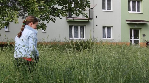 Také letos se budou ve Žďáře některé trávníky sekat jako louka