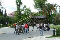 Májku v Buchlovicích postavila tamní mládež na náměstí.