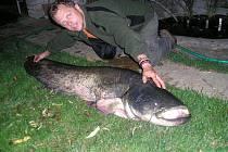 Soutěžní číslo 20: Ladislav Valštýn, sumec velký, 185 cm, 62 kg, Morava 8