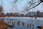 Vráj bruslařů se o prvním březnovém víkendu proměnila poprvé vletošní zimě zvelké části ledem pokrytá hladina jeden a půl hektarového Konventního rybníka pod Archeoskanzenem Modrá.
