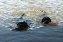 Na plavce se ve Starém Městě pes zavěsil a začal jej topit.Ilustrační foto.