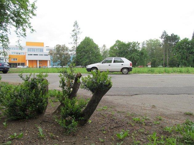 To, které stromy v areálu padnou a kolik jich celkově bude, zatím jasné není. Teprve se o tom jedná.