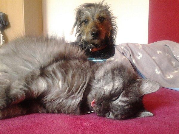 Mazlíček roku: Bobiš a Bertík, těžké vstávání.