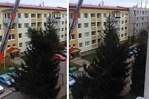 Vánoční smrk přišel neopatrnou manipulací o špici.