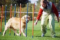 Chovatelé museli se svými psy co nejrychleji zdolat překážkové dráhy.