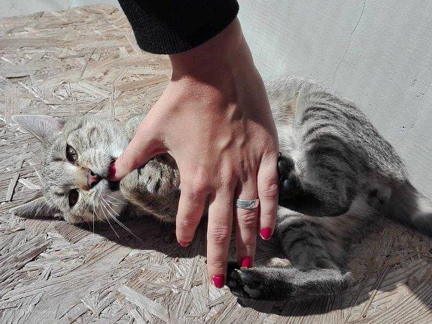 Celkem 57 koček, 49 kocourů a 32 koťat se momentálně nachází v péči majitelů Jarmily Zlámalíkové a Jaroslava Misíka v Nedakonicích.