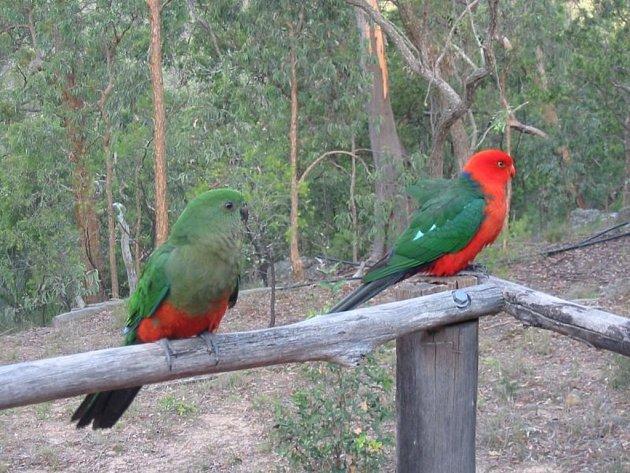Ztracený a nalezený papoušek (vlevo) čeká na svého majitele.