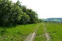 Nová asfaltová cesta vznikne vlevo od polní cesty, která je soukromá. Vykáceny tak budou stromy a keře.