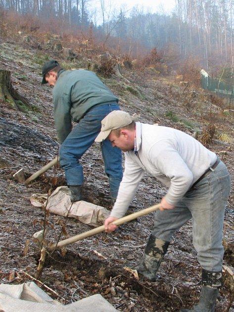 Pavel Tomanec (v popředí) umí pracovat nejen s motykou, ale i s motorovou pilou.