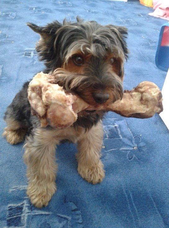 6. JEFFÍK. Takhle vypadá psí štěstí.