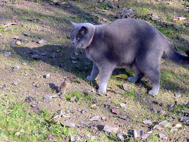 KLÁRKA. Normálně myši loví, ale stouhle si chtěla pokecat.