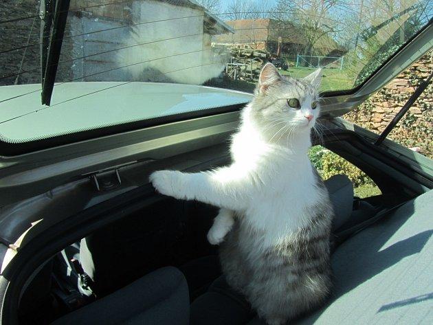 CASSIE. Zrovna prozkoumávala naše nové autíčko a na zahrádku se jí už ani nechtělo.